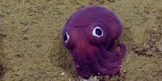 Il mollusco viola con gli occhioni che sta incantando il web ...